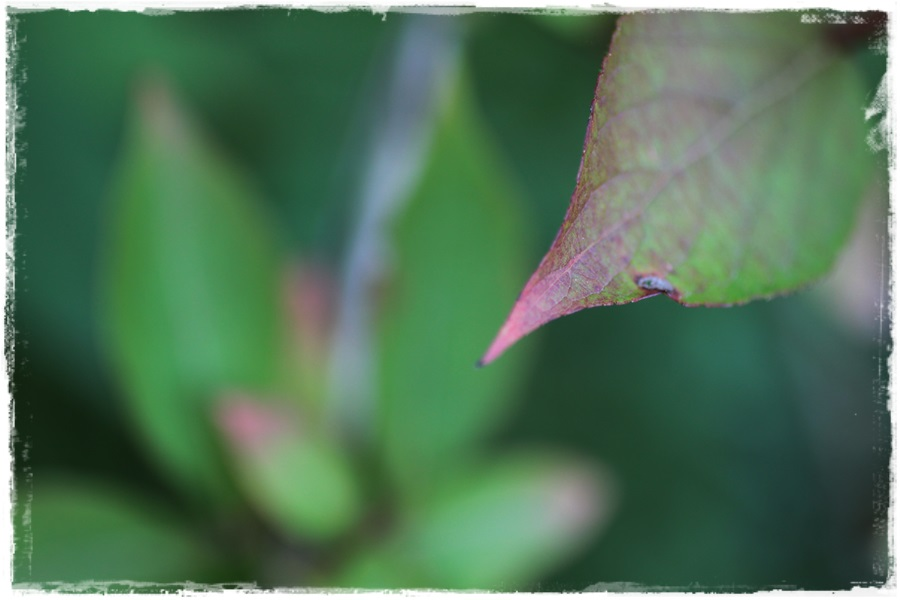 Herbstlich4