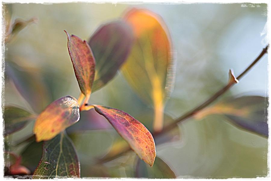 Herbstlich9