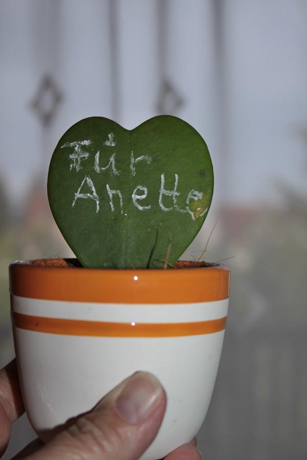 Kaktusherz