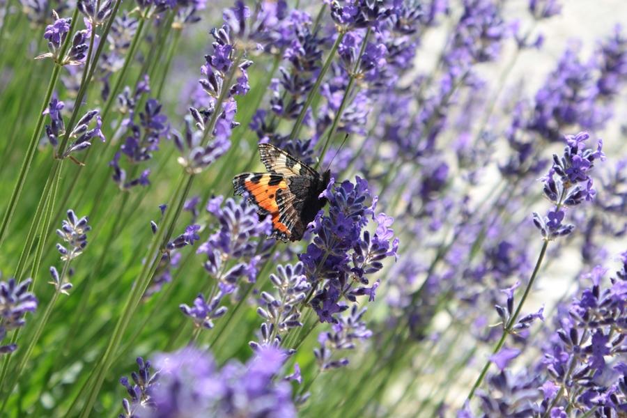 Schmetterleichte Sommergrüße
