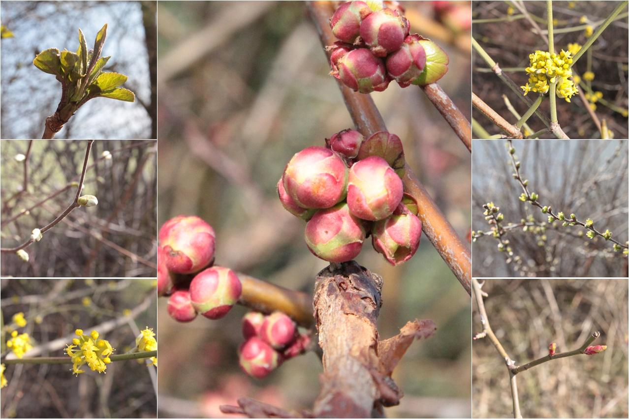 Frühling_Collage