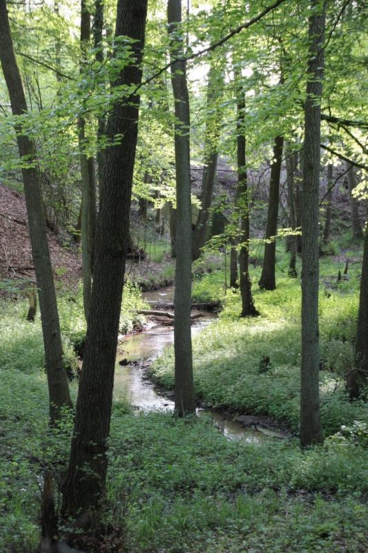 Wald_I