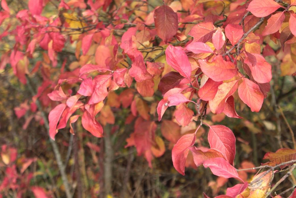 Herbst2015_10