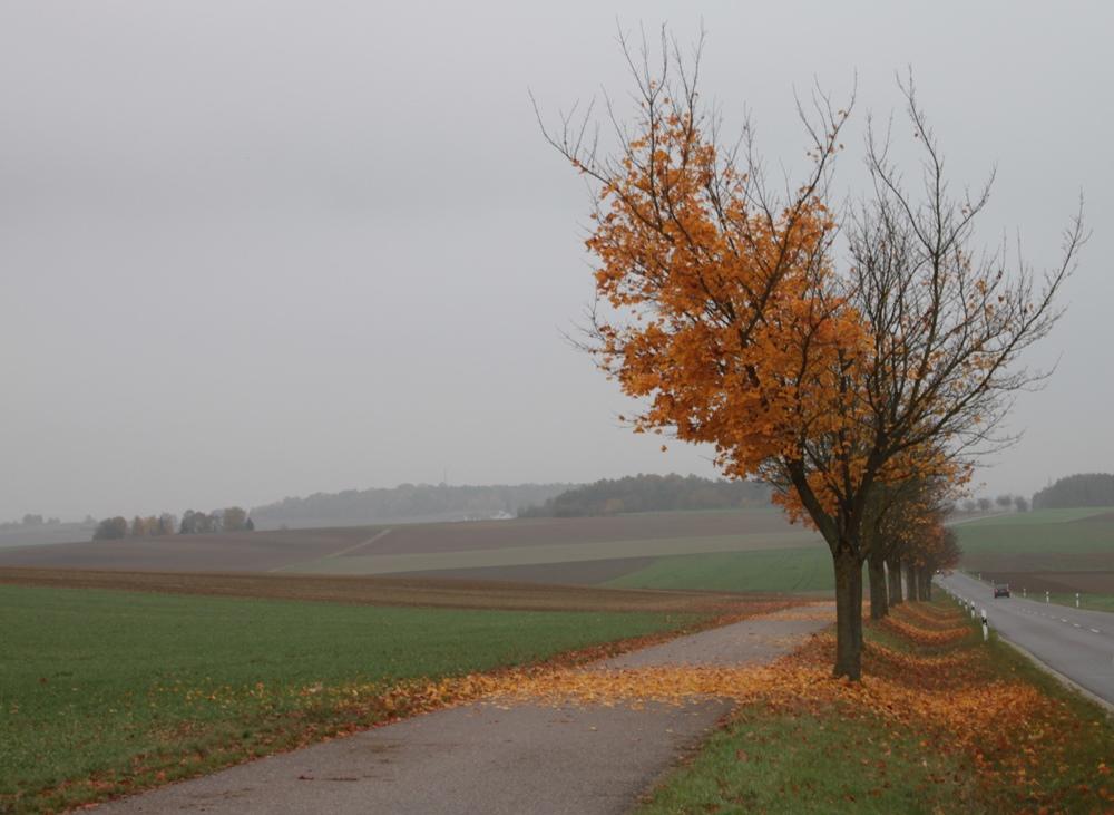 Herbst2015_4