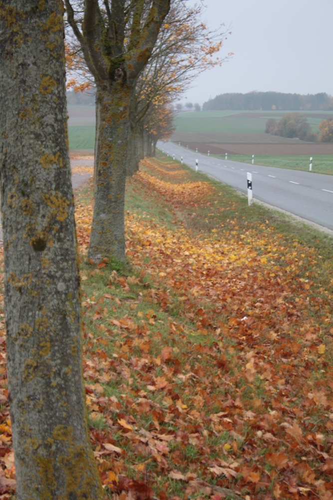 Herbst2015_5