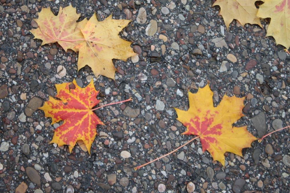 Herbst2015_6