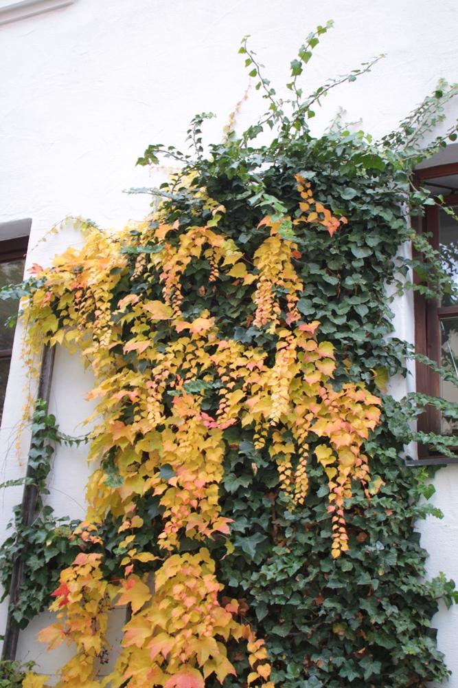 Herbst2015_7