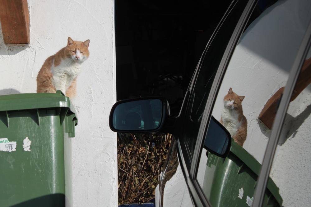 23_Unterwegs-Katz