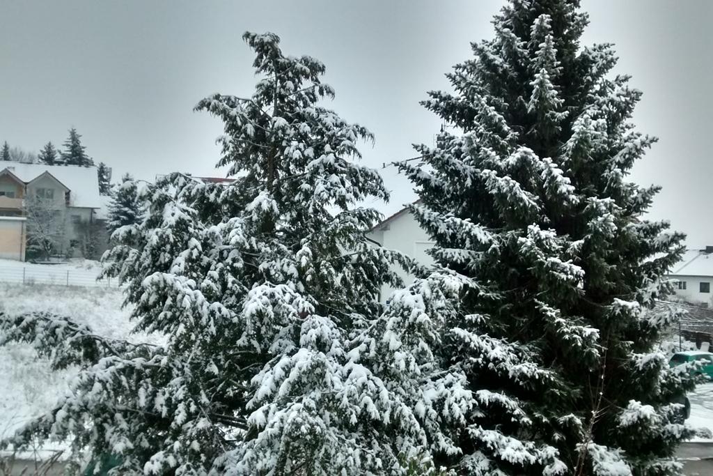 Doch_Winter